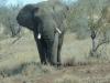 mayfield-hire-4x4-zambia-zimbabwe-25